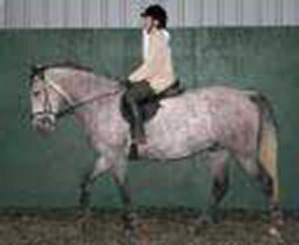 Girl rides grey horse in an indoor arena
