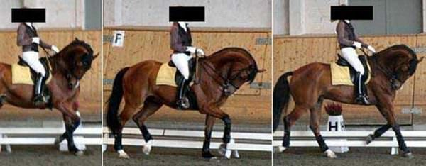 Sequential images showing horse in extreme hyperflexion rollkur under saddle