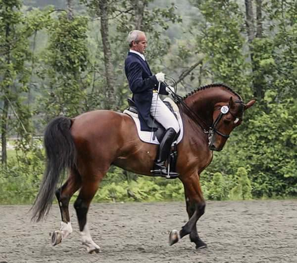 Man rides horse in Rollkur at dressage show warmup