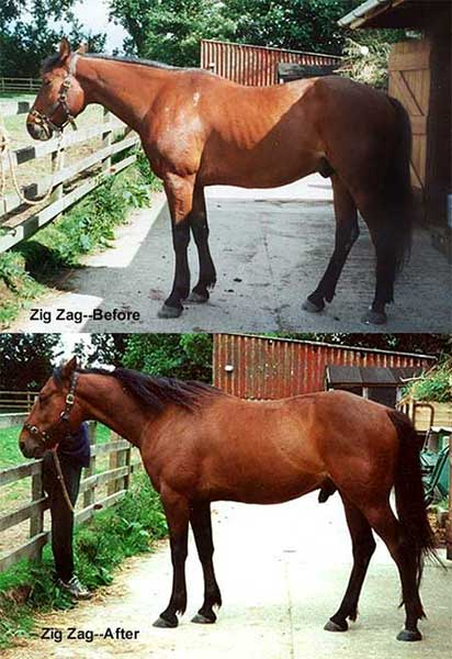 Before and After of a Horse's Topline