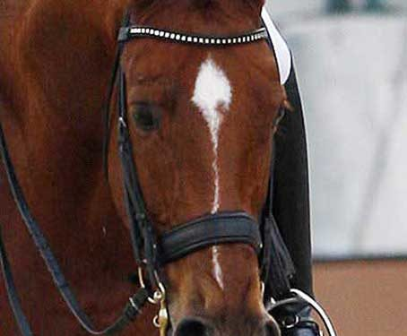 Student of Anky van Grunsven Adelinde Cornelissen was disqualified during a ride when her horse cut it's mouth on the bit