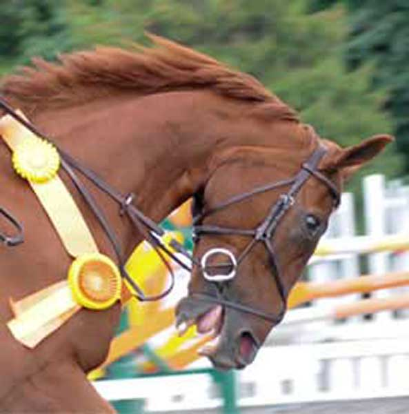 Congratulations! This horse won a ribbon by being pulled into an uncomfortable frame of hyperflexion