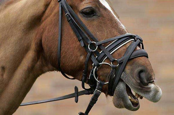 The use of tight nosebands is not only allowed but encouraged in order to gain submission from the horse