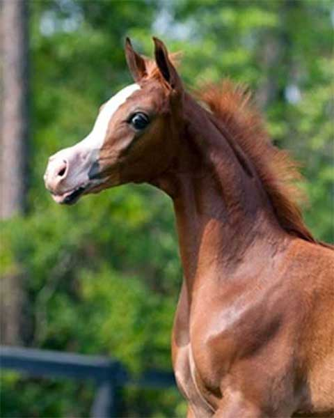 Backyard Breeding is the Blight of the Horse Industry ...