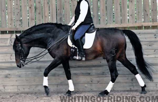 Allowing the horse to stretch his whole body while working helps prevent muscle pain which can lead to behavioral issues as the horse resists the rider requests.