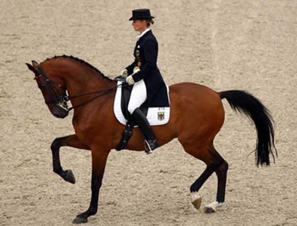 Pulling on the horse's reins, spurring him forwards, strung out and tense .. is not dressage.