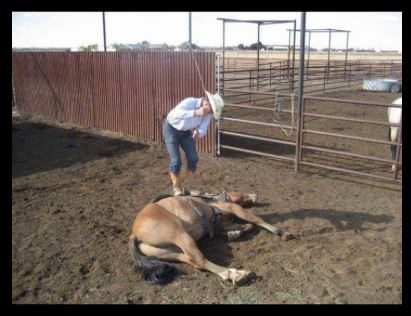 how to help an abused horse