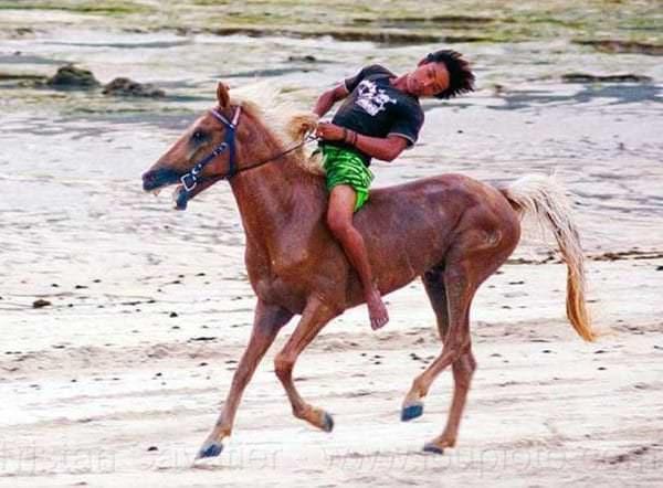 funny horse fails - 814×600