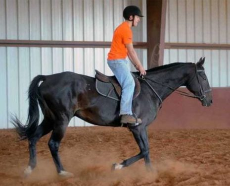 Posting Trot : Stabilizing Those Legs