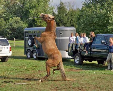 """Don't """"Train"""" Your Horse : Become His Physical Trainer"""