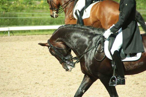 Rollkur hyperflexion of the neck during a warmup for Grand Prix Dressage competition