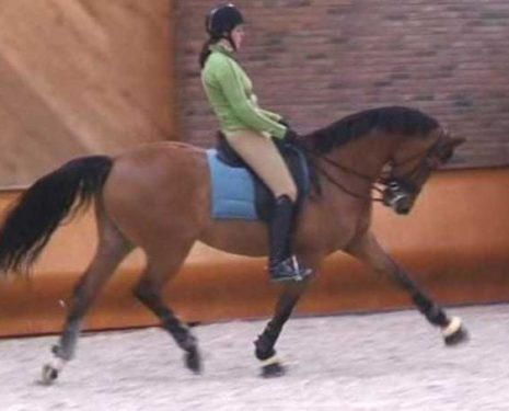 A student of Anky van Grunsven rides her horse in hyperflexion while leaning backwards in the saddle