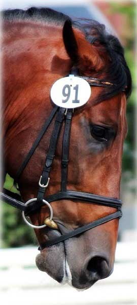 This horse's eyes aren't dead, they're pained. A mouth tied shut with a flash caveson, bit pulled out of his mouth and being ridden behind the vertical.