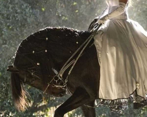Friesians are often the subject of romanticized abuse thanks to their dramatic physical traits. This horse's rider should be pulled from his back and forced into the position she's requiring of her horse.