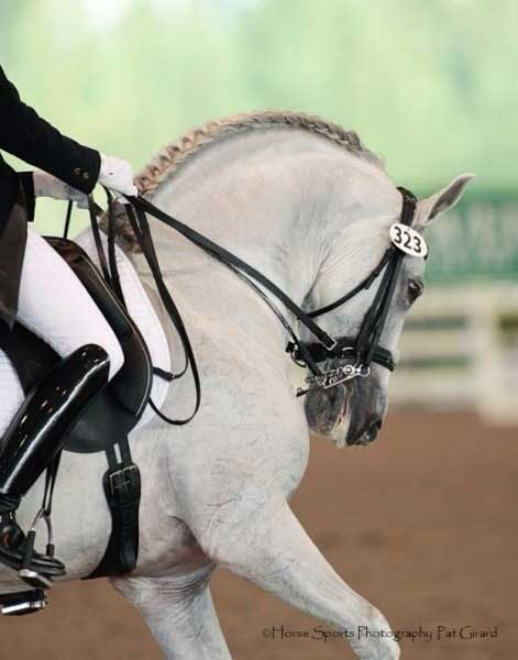 Spanish horses are often ridden overbent as the norm to further dramatize their already dramatic body style. It is still wrong, and stresses the horse to be ridden in this fashion - physically, mentally and emotionally.