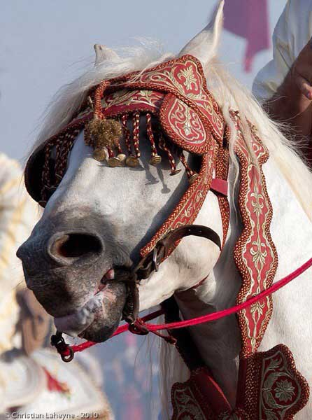 Horses are often on the losing end of promotions, used to draw people into exotic travel destinations and vacations, while openly displaying animal abuse.
