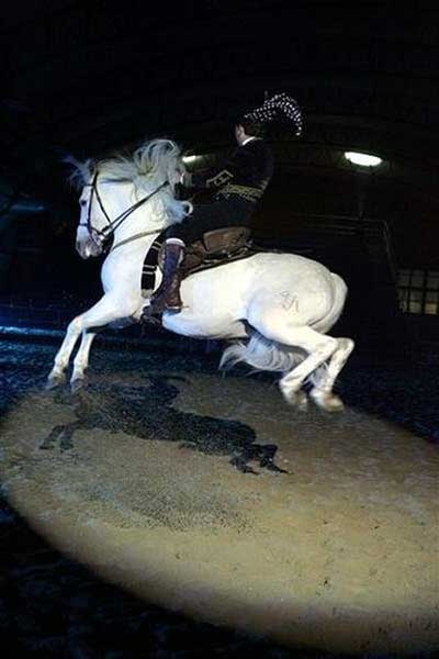 Just because your horse can perform elaborate movements doesn't mean you're ready to ride them without hurting him. This rider is damaging the horse's mouth, and likely falling onto his back on landing because he's not ready to sit this maneuver.
