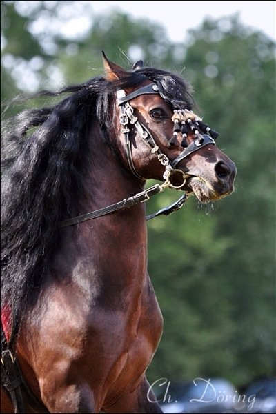 Even this beautiful horse is not immune to feeling frightened, but this image is not meant to convey his fear but instead to emphasize a general attitude about horses being beautiful - even if they are terrified.