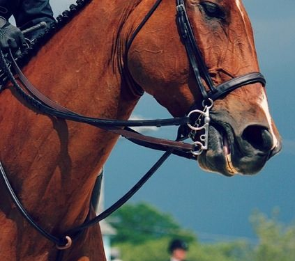 Something is missing when your horse is showing tension in the eyes and mouth, be careful not to mask it with additional tack, tight caveson or auxillary reins.