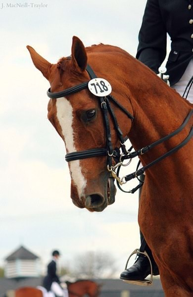 Dull, dead eyes are an indication that there's a disconnect between the horse and the humans interacting with him.