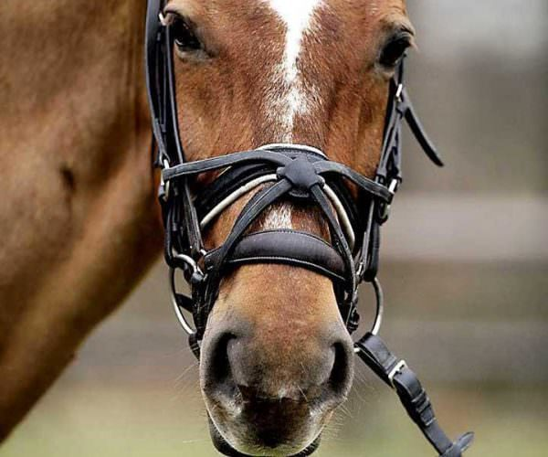 Ban The Noseband Writing Of Riding