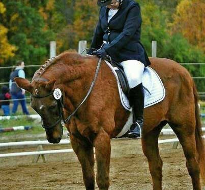The Longevity of the Dressage Horse