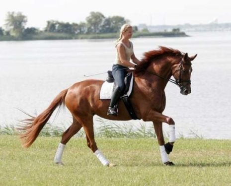 Classical Dressage Inspiration: Visuals for the Week #2