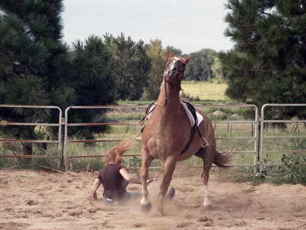 Image result for falling from horse