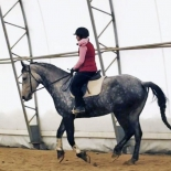 Beautiful gray horse, ridden without a noseband on its bridle. #ditchthenoseband