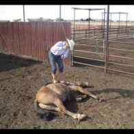 Logan Allen whipping a horse while its leg is tied up and lying on the ground.