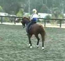 Anky van Grunsven riding her horse harshly in hyperflexion/rollkur.
