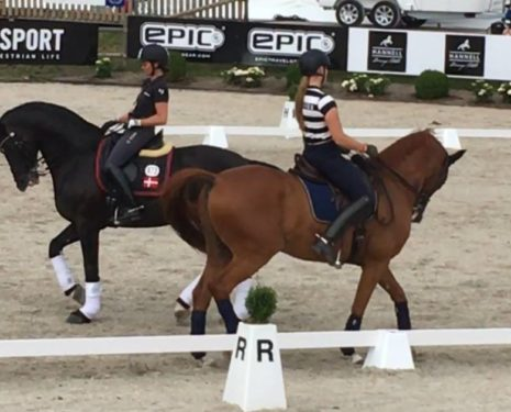 Horse abuse still allowed at Falsterbo Horse Show