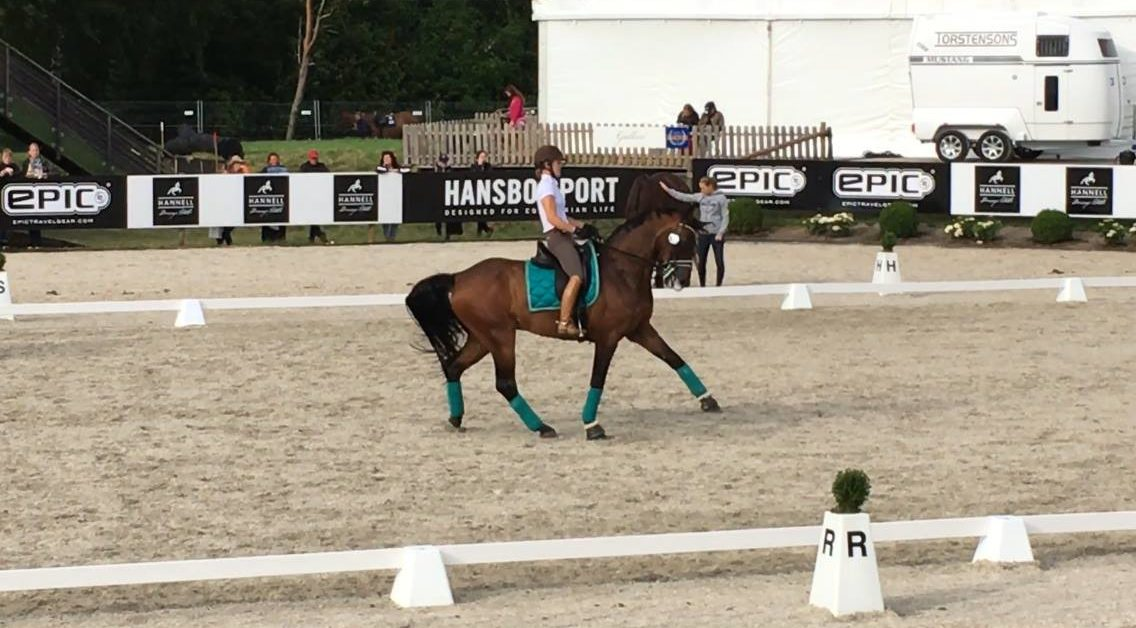 Rollkur aka LDR was on prominent display at the 2016 Falsterbo Horse Show in Sweden, hallmarking the fact that horse abuse is still widely allowed at Dressage competitions.