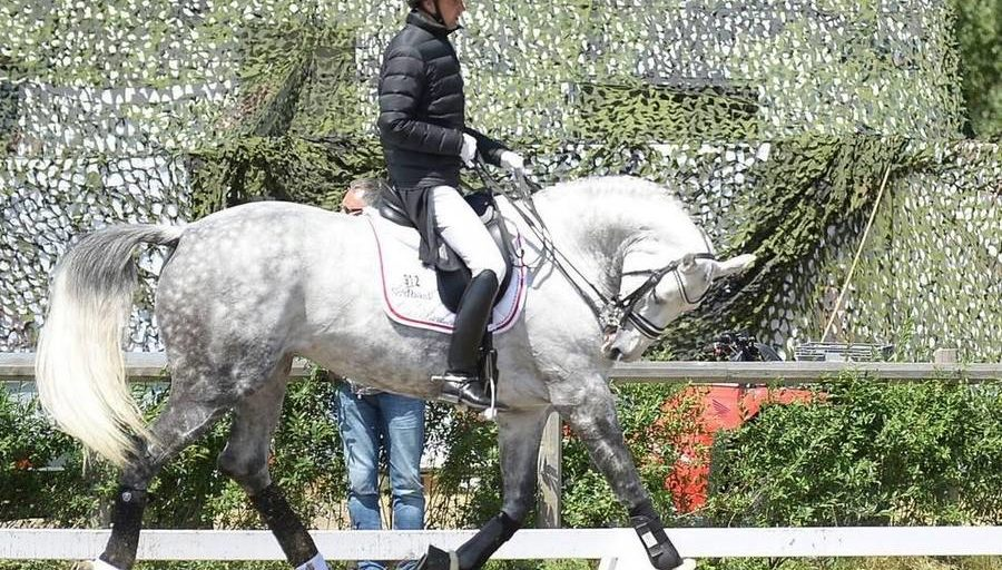 Andreas Helgstrand riding his horse in deep hyperflexion.