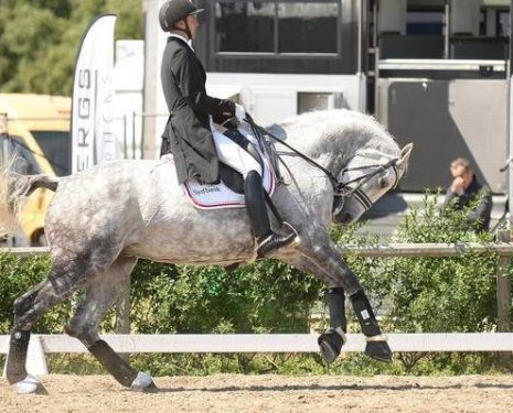 Dressage in Crisis