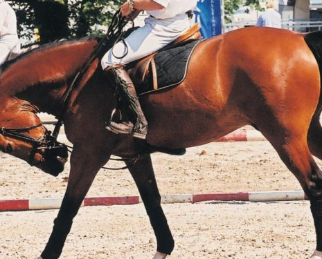5 Ways to Confront Horse Abuse