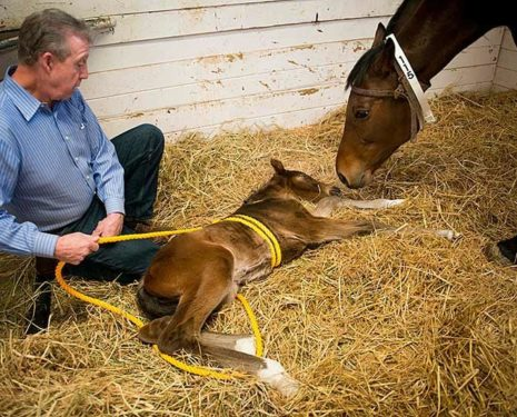Link Between Autism and Dummy Foal Syndrome?
