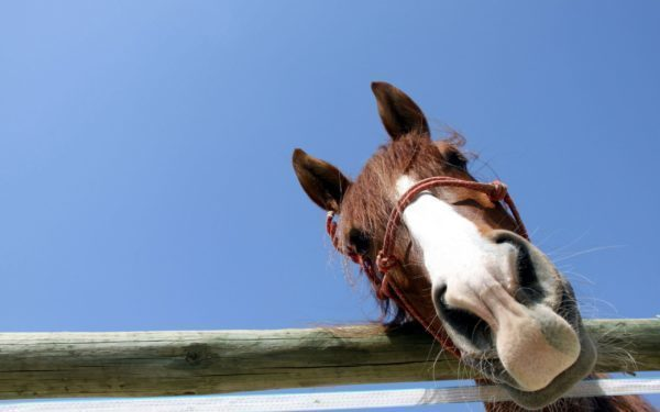 A curious horse pokes his face over the a fence.