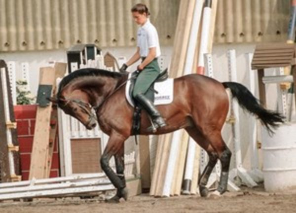 Nicole Uphoff riding her horse Rembrandt in hyperflexion, which would eventually become known as Rollkur.