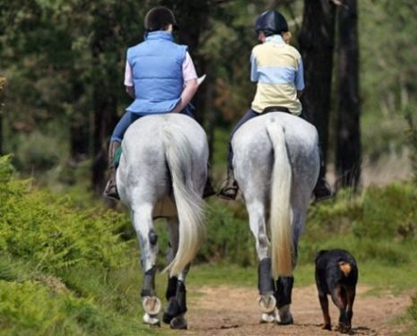 Two riders take their horses out for a hack with their dog.