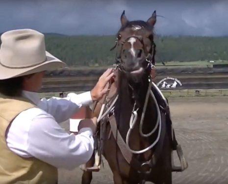 Gerry Cox Needs a Horsemanship Lesson