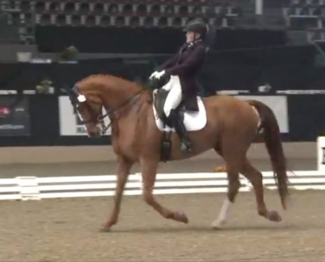 Shelley Browning Demonstrates Blatant Abuse in a Dressage Test